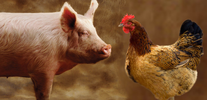 03 - Pig-and-hen.jpg